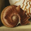 'Still Life with Nautilus', Watercolour, Jenny Barron